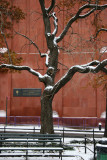 Golden Rain Tree & NYU Library