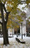 Scholar Tree & the Arch