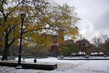 Scholar Tree, NYU Law School, Judson Church & Fountain Plaza