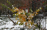Snow & Witch Hazel Foliage