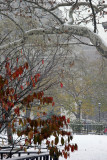 Snow Flurries, Burning Bush Foliage, Sycamore Tree Branch & Arch