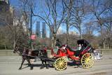 Horsedrawn Carriage near 5th Avenue with CPS & CPW Skyline Views