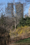Park & CPW Skyline View near 65th Street Traverse Road