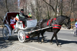 Horsedrawn Carriage near the Mall