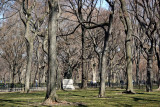 The Mall & Literary Walk - American Elm Stand