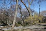 View toward Bethesda Fountain