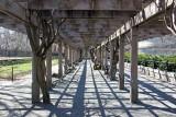 Wisteria Promenade