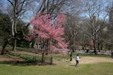 Park View - Prunus Tree Blossoms & CPE Skyline
