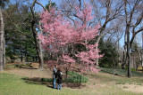 Viewing Cherry Blossoms near the Boathouse