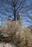 Winter Honeysuckle Bush & the Belvedere Castle