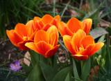 Gardens - 2008