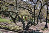 Entrance to Shakespeare Garden
