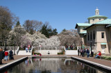 Lily Pond & Magnolias