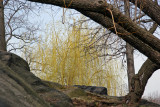 Willow Tree Window Near Fort Fish - Harlem Meer