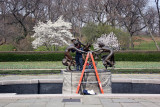 Three Dancing Muses Getting Cleaned Up - Conservatory Gardens