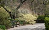 Daffodils, Winter Hazel & Spirea - Conservatory Gardens