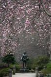 Magnolias & Cervantes