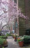 Spring Garden - Ascension Church