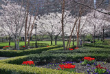 Cherry Blossoms and Tulips at the Financial Center Garden