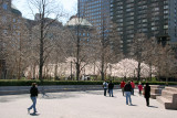 Financial Center Gardens - Cherry Tree Blossoms