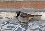 A Sparrow near the Judson Church Doors