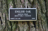 English Oak Bark