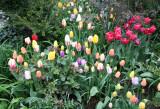 Garden View -Tulips