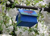 Blue Birdhouse in an Apple Tree
