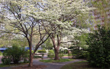 Garden View - Dogwood & Willow Trees