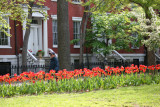 Tulips & WSN Historic Residences