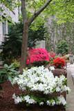 Azalea Garden - NYU Cervantes Courtyard
