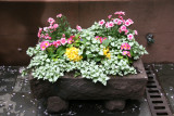 Miniature Garden Arrangement