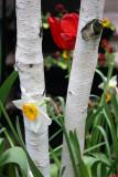 Daffodil, Birch & Tulip
