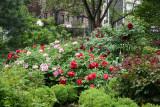 Garden View - Tree Peonies