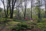 Native Plant Garden - Rhododendron & Azalea