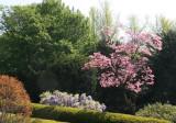 Dogwood - Brooklyn Botanical Gardens