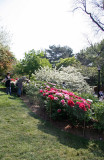 Peony & Cherry Tree Gardens