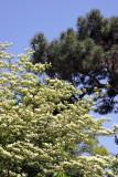 Rock Garden - Dogwood & Pine Tree