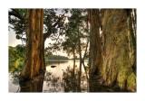 Jubilee Reservoir