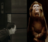 The researcher and the shy monkey