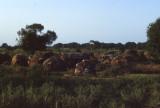 Nomad settlement