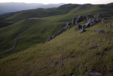 Rolling Hills small.jpg