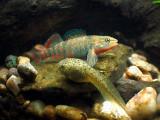 Native Species Paludarium