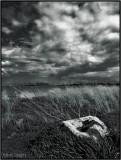 Wind on a Field under a Dark Sky