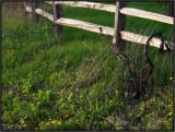 Life Along a Fence