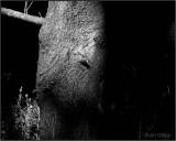 Tree in Shadow