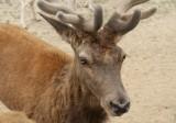 GKIDS visit the Global Wildlife Park