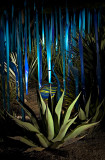 Chihuly_(17_of_23).jpg