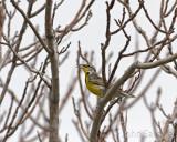 Meadowlark in song. Farmington 4-24-08