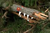 Croc or Gator, definitely coniferous
